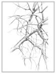 pencil sketch of bare tree branches