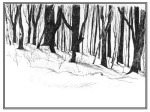 pen and ink sketch of bare trees in snow