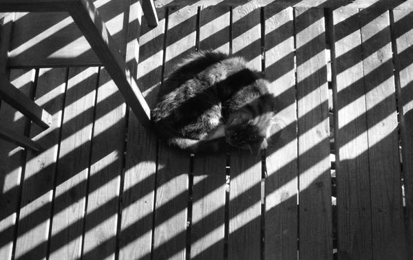 black and white photo of cat curled on deck with shadows