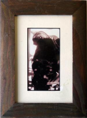 sepia photo of tabby cat in sun
